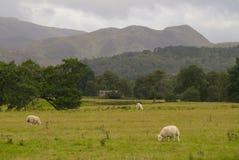 Skotsk Skotska högländernapåsk Ross Scotland UK Royaltyfri Foto