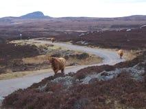 Skotska högländerna av Skottland trafikstockning royaltyfri foto