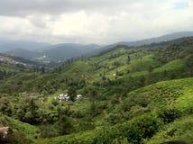 Skotska högländerna för tegods@ Kamerun, Malaysia Arkivbild