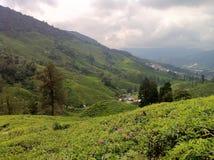 Skotska högländerna för tegods@ Kamerun, Malaysia Arkivbilder
