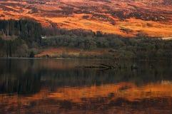 Skotska högländerna och skogreflexion Royaltyfria Bilder