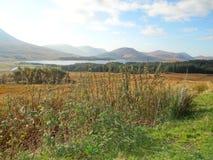 Skotska högländerna - Skottland Fotografering för Bildbyråer