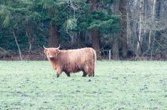 Skotska Highlanders Fotografering för Bildbyråer