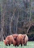 Skotska Highlanders Royaltyfri Bild