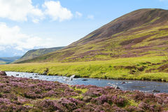 Skotskt höglands- lantligt landskap Fotografering för Bildbyråer
