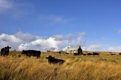 Skotskt Hebridean landskap Arkivbild