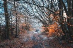 Skotskt trä i vinter Royaltyfri Fotografi