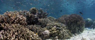 Skott över en intakt korallrev med koraller och många tropisk fisk, ultrarapid stock video