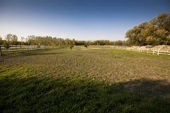 Skott av en paddock med två hästar i avståndet Arkivbilder