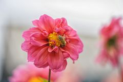Skott av ett kryp på en blomma Arkivbilder
