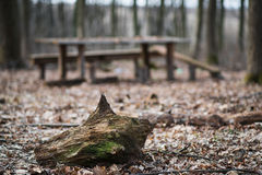 Skott av stubben i förgrunden och trätabellen med bänkar på bakgrunden Arkivfoto