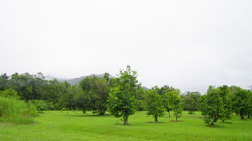 Skott av träd och gräs- land stock video
