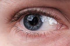Skott för grå färgögonmakro arkivfoton