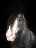 Skott för hästhuvud Arkivbilder