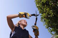 Skott för låg vinkel av brämhäcken för ung kvinna Fotografering för Bildbyråer