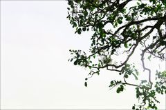 Skott för trädfilialer för tapet royaltyfri foto