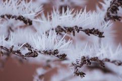 Skott för vinterlandskapmakro royaltyfri foto