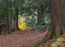 Skotte Autumn Woodland arkivfoto