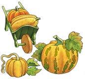 Skottkärra för växt för teckning för pumpagrönsakfrukt stock illustrationer