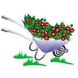 Skottkärra trädgårds- raster för pushcart Royaltyfri Foto