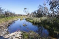 skovel Booderee nationalpark NSW australasian Royaltyfri Bild