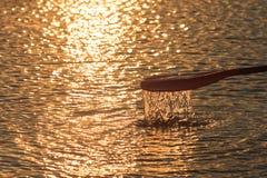 Skovel i vattnet på gryning Närbild horisontal konkurrensar som dyker pölsportar som simmar vatten Royaltyfria Bilder