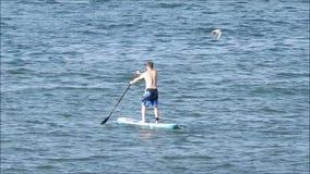 Skovellogi som surfar surfingbrädasportar på havet arkivfilmer