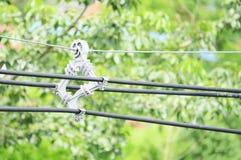 Skowy patka zdjęcia stock