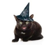 Skrämd katt för svart med hatten för halloween Isolerat på vit Fotografering för Bildbyråer