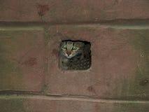 Skrämd katt som döljas i källarelufthålet arkivfoto
