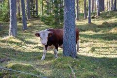 Skrämma att gå och att äta gras i en skog arkivbilder