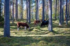 Skrämma att gå och att äta gras i en skog royaltyfri foto
