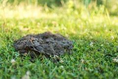Skrämma dynga på trädgården, gödsel på ett grönt gräs ukraine Royaltyfria Foton