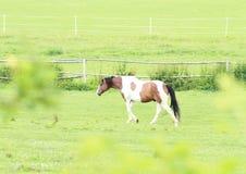 skrämma hästen Royaltyfri Foto