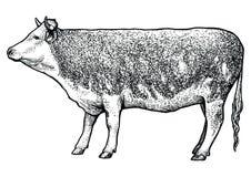 Skrämma illustrationen, teckningen, gravyr, linjen konst som är realistisk Stock Illustrationer