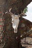 Skrämma skallen som hänger på ett träd med röda Christamas ljus Arkivbilder