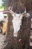 Skrämma skallen som hänger på ett träd med röda Christamas ljus Royaltyfria Bilder
