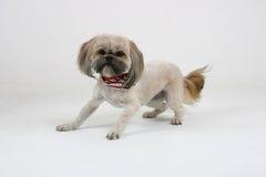 skrämmd hund Fotografering för Bildbyråer