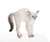 skrämmd kattunge Arkivfoton