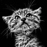 skrämmd kattunge Fotografering för Bildbyråer
