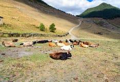 skrämmer berg Tusheti region georgia Royaltyfri Foto