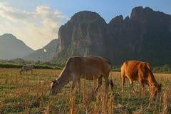 Skrämmer paradis på Laos Arkivbilder
