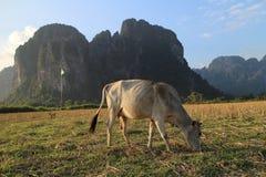 Skrämmer paradis på Laos Royaltyfria Foton