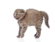 Skrämt behandla som ett barn kattungen i profil bakgrund isolerad white Arkivfoto