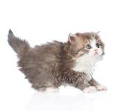 Skrämt behandla som ett barn kattungen i profilen som ser upp Isolerat på vit Arkivbilder