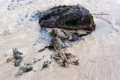 Skräp på stranden Royaltyfri Foto