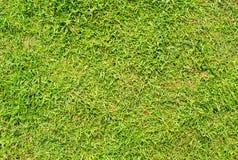 Skrót zielonej trawy tło Zielonej trawy pola fotografii tło Wiosna sztandar świeża zielona trawa Zdjęcie Royalty Free