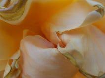 SKÓRA kwiat Obrazy Royalty Free