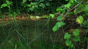 Skradinski Buk, cascade en parc national Krka moustique banque de vidéos