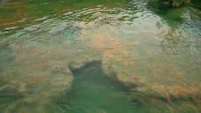Skradinski Buk, waterfall in national park Krka stock video footage
